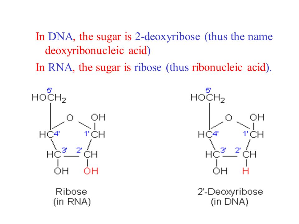 In DNA, the sugar is 2-deoxyribose (thus the name deoxyribonucleic acid)