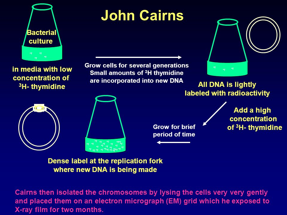 John Cairns Bacterial culture in media with low concentration of