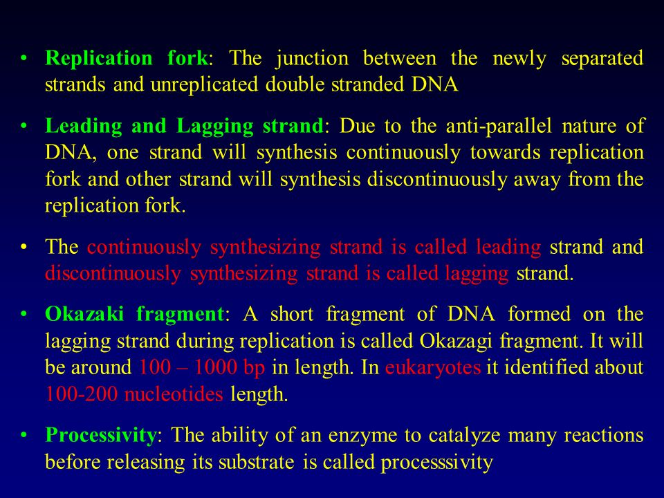 Replication fork: The junction between the newly separated strands and unreplicated double stranded DNA