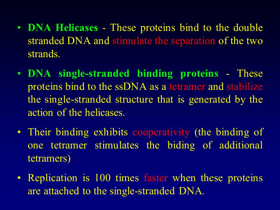 DNA Helicases - These proteins bind to the double stranded DNA and stimulate the separation of the two strands.