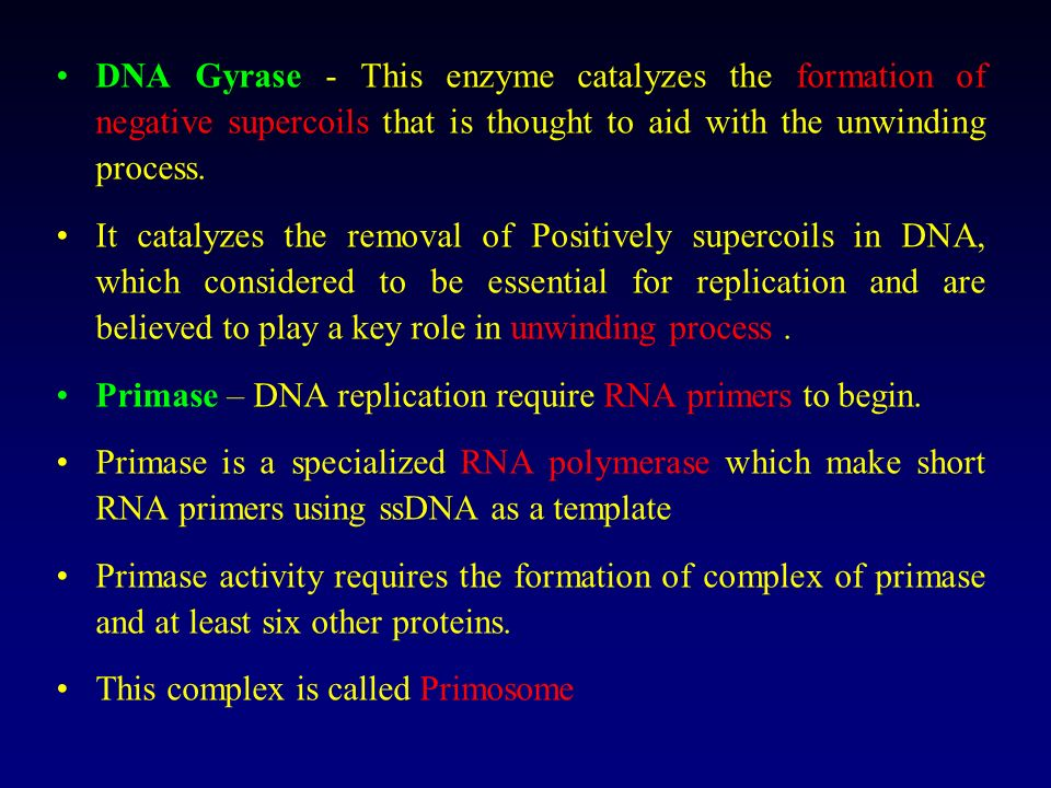 DNA Gyrase - This enzyme catalyzes the formation of negative supercoils that is thought to aid with the unwinding process.