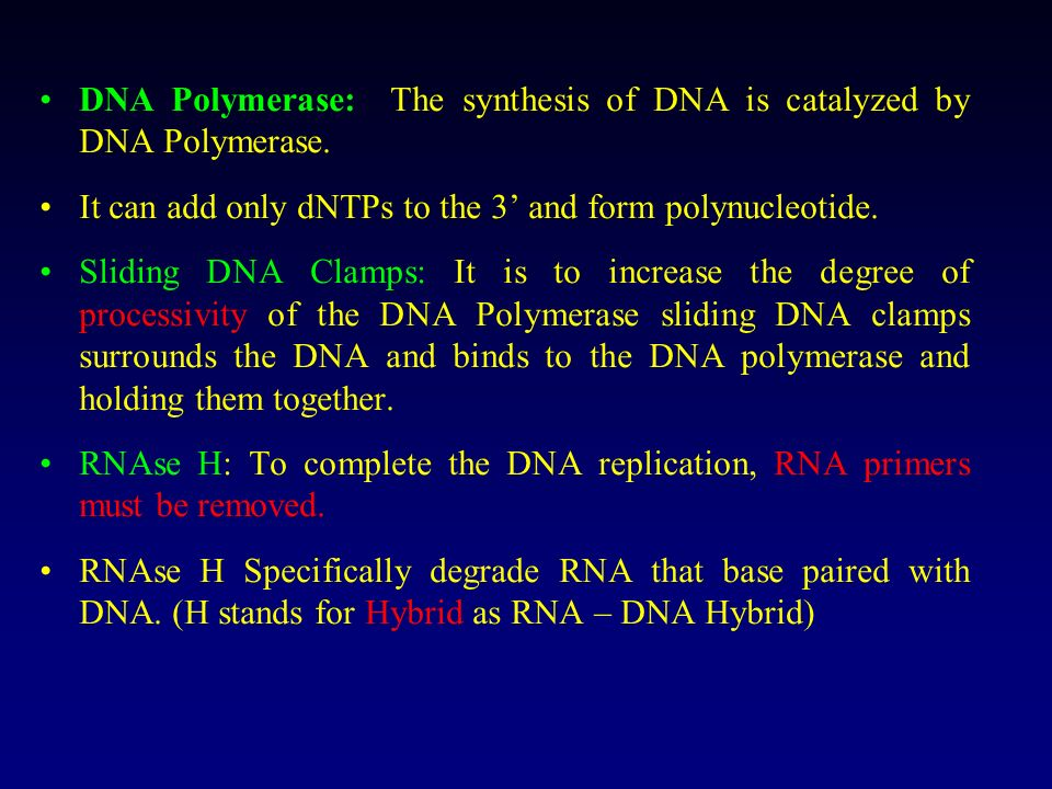 DNA Polymerase: The synthesis of DNA is catalyzed by DNA Polymerase.