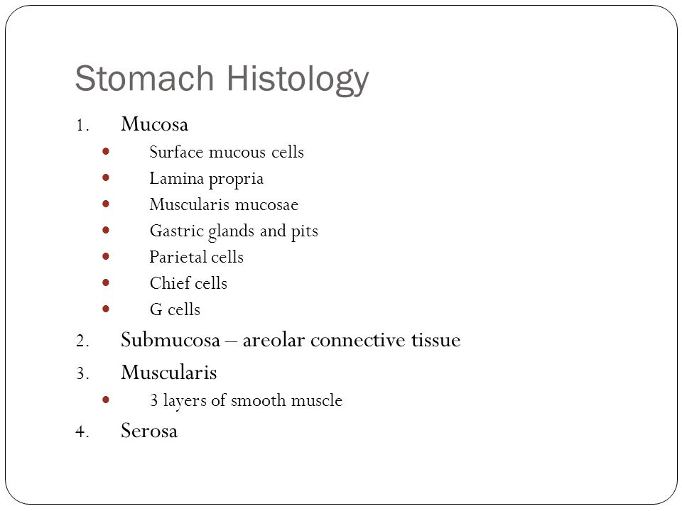 Stomach Histology Mucosa Submucosa – areolar connective tissue