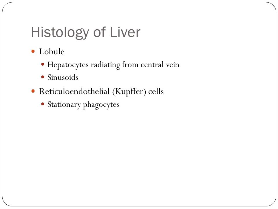 Histology of Liver Lobule Reticuloendothelial (Kupffer) cells