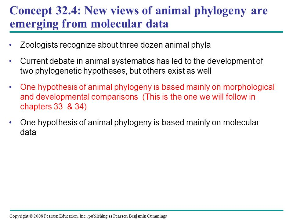 Concept 32.4: New views of animal phylogeny are emerging from molecular data