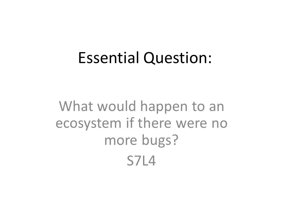 What would happen to an ecosystem if there were no more bugs S7L4