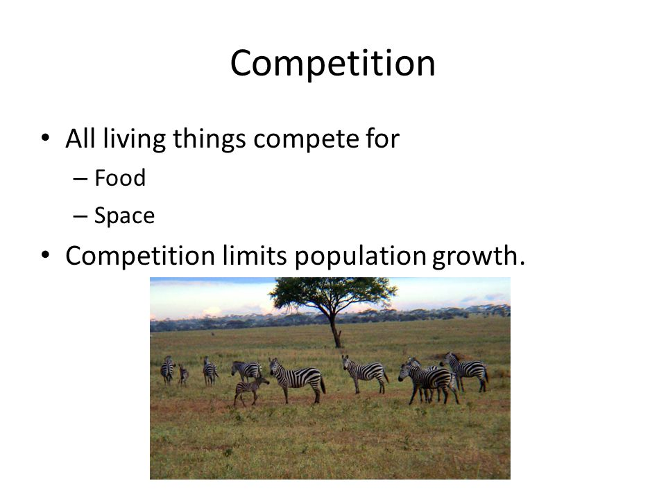 Competition All living things compete for