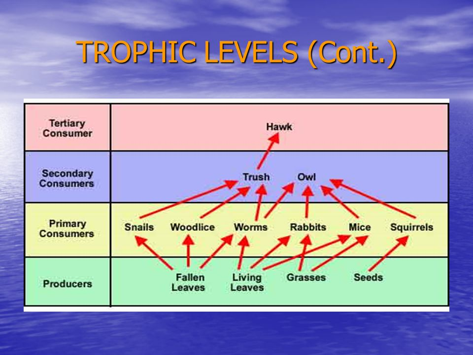 TROPHIC LEVELS (Cont.)