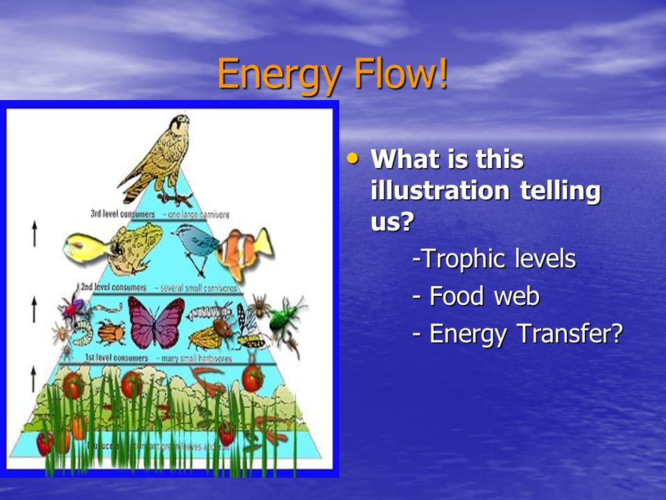 Energy Flow! What is this illustration telling us -Trophic levels