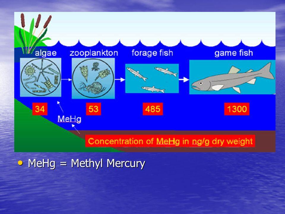 MeHg = Methyl Mercury