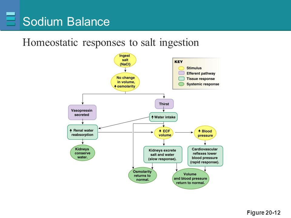 Sodium Balance Homeostatic responses to salt ingestion Figure 20-12