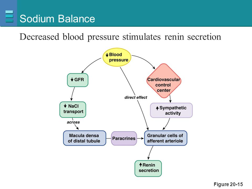 Sodium Balance Decreased blood pressure stimulates renin secretion