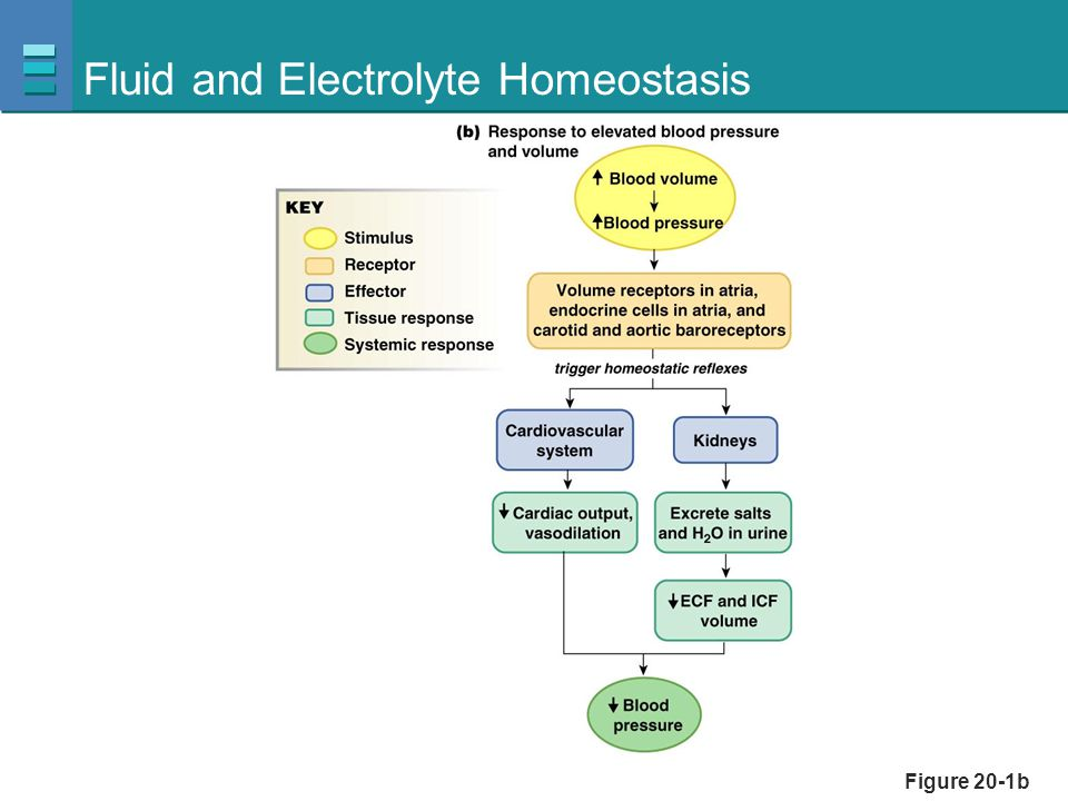 Fluid and Electrolyte Homeostasis