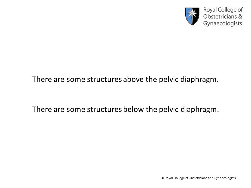 There are some structures above the pelvic diaphragm.