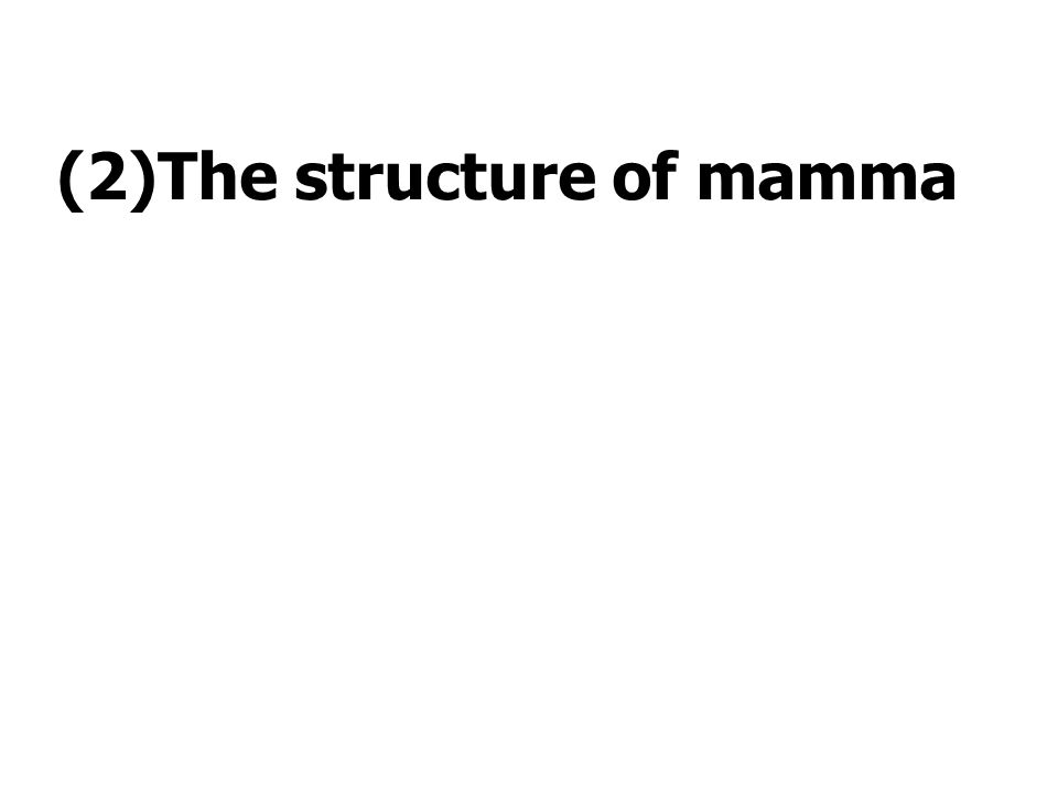 (2)The structure of mamma