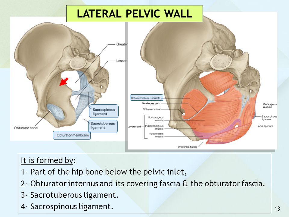LATERAL PELVIC WALL It is formed by: