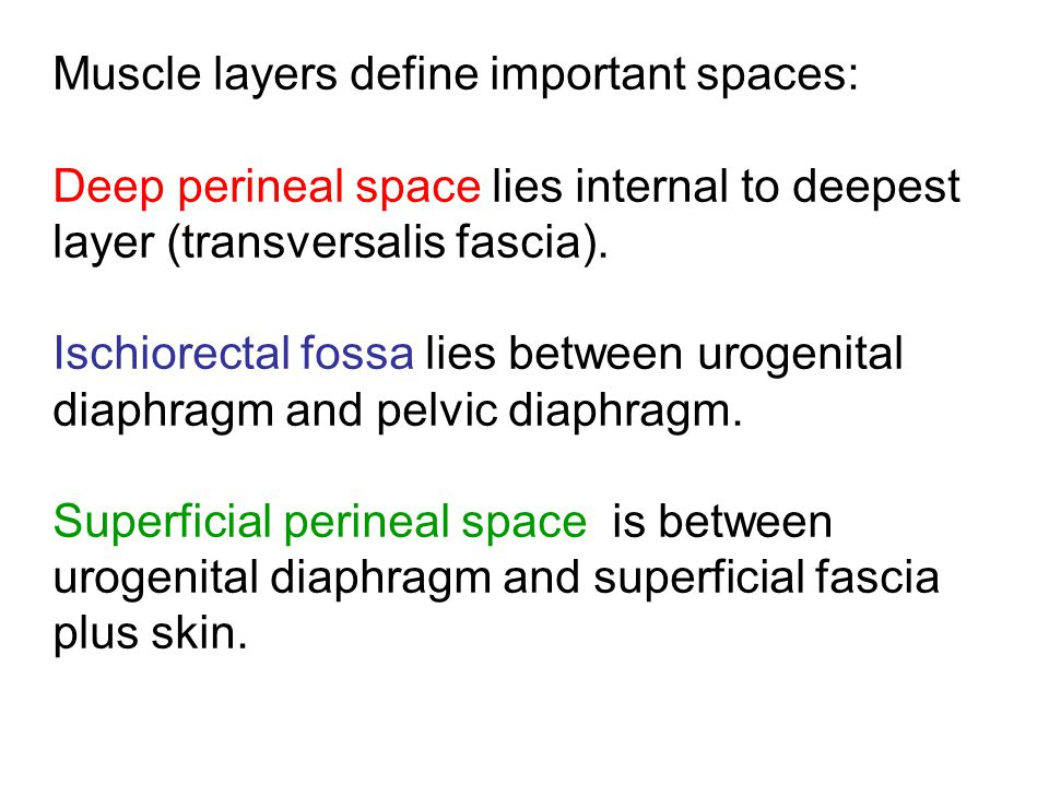 Muscle layers define important spaces: