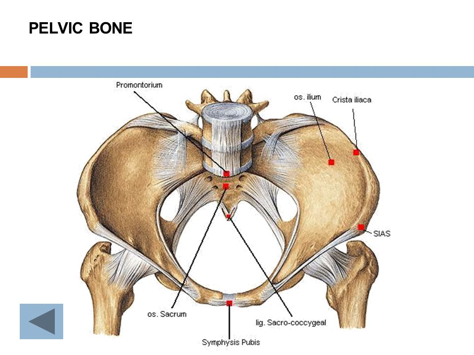 Anatomy Of Female Pelvic Ppt Video Online Download