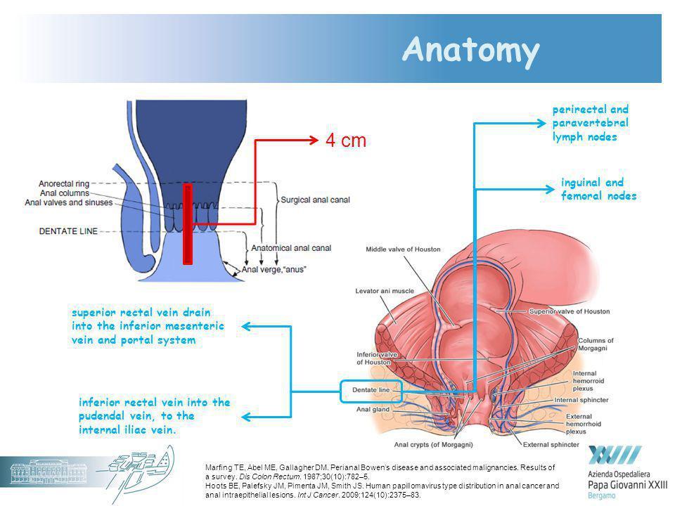 Patologie Neoplastiche Hpv Correlate In Proctologia Ppt Video