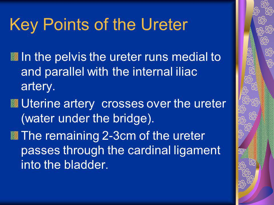 Key Points of the Ureter