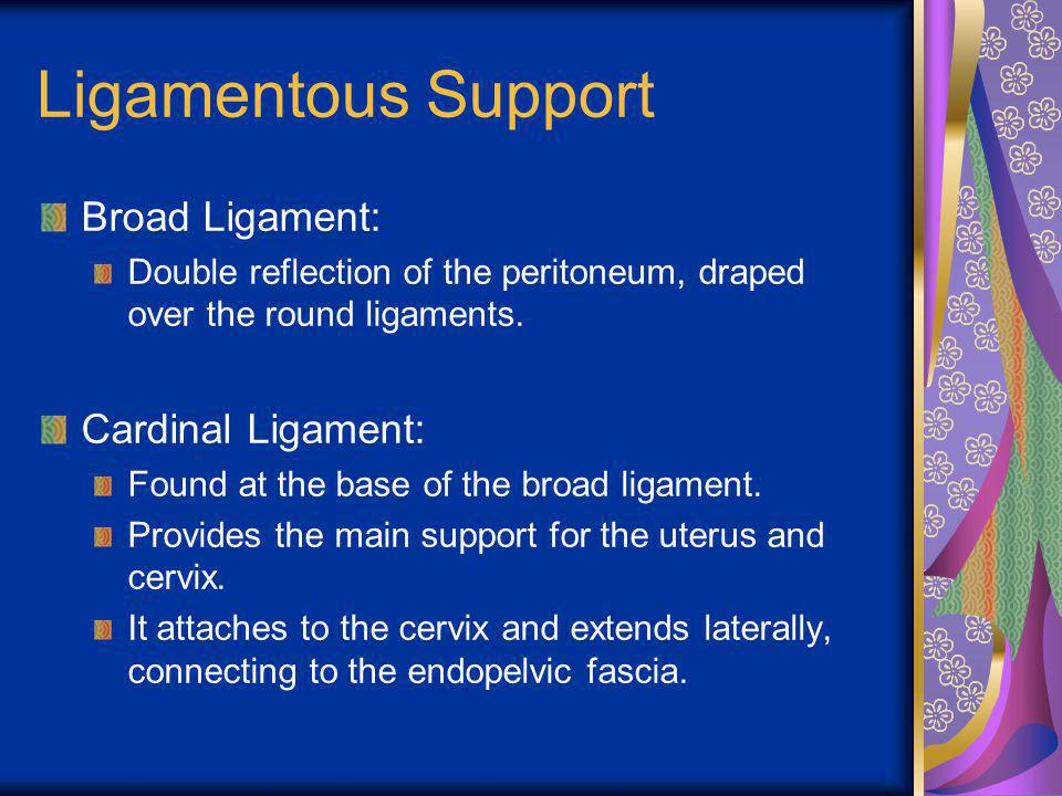 Ligamentous Support Broad Ligament: Cardinal Ligament: