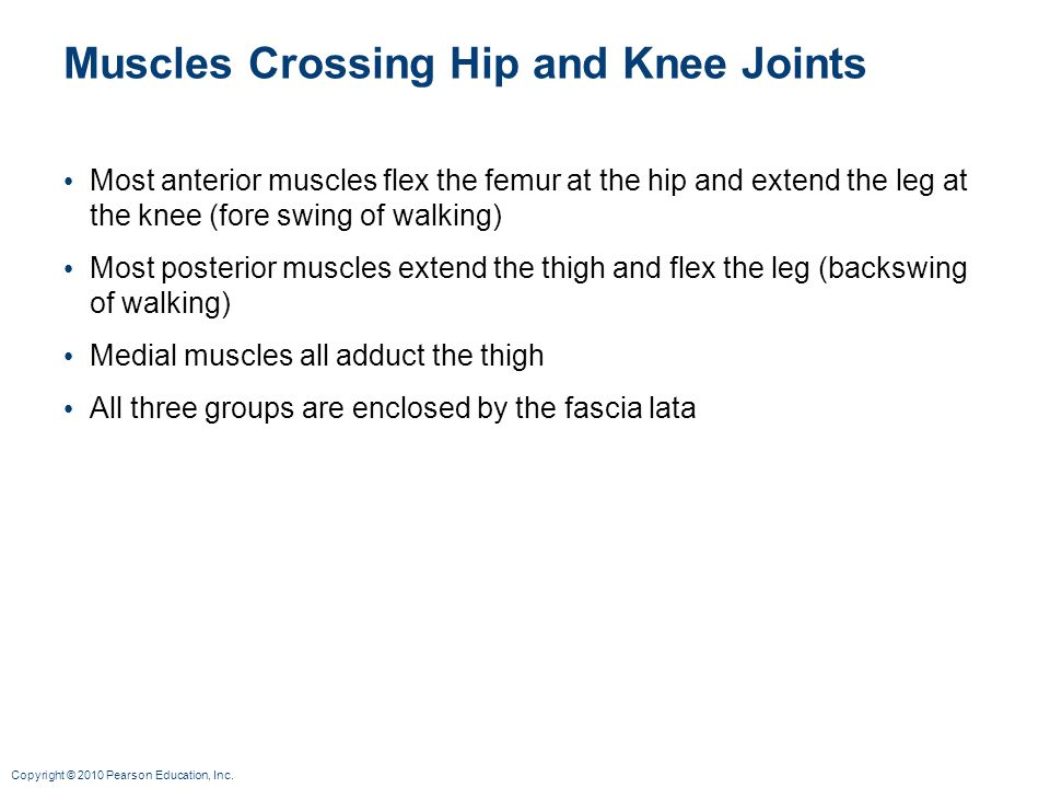 Muscles Crossing Hip and Knee Joints