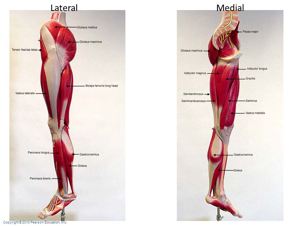 Lateral Medial