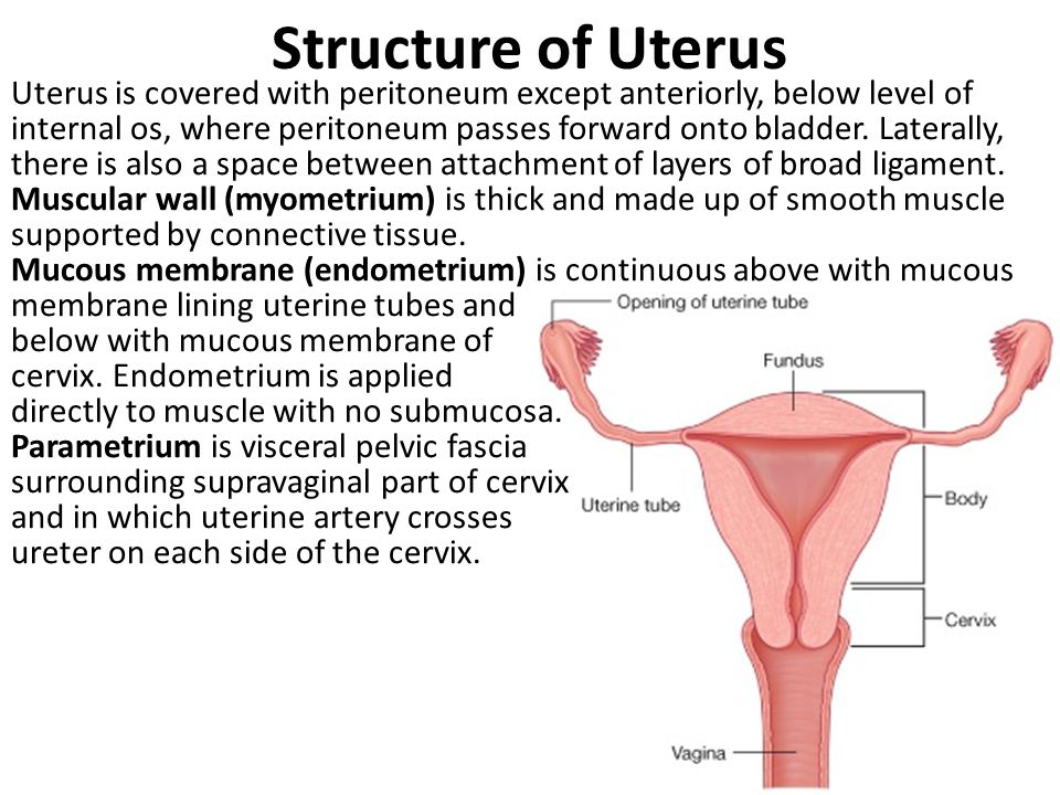 Structure of Uterus