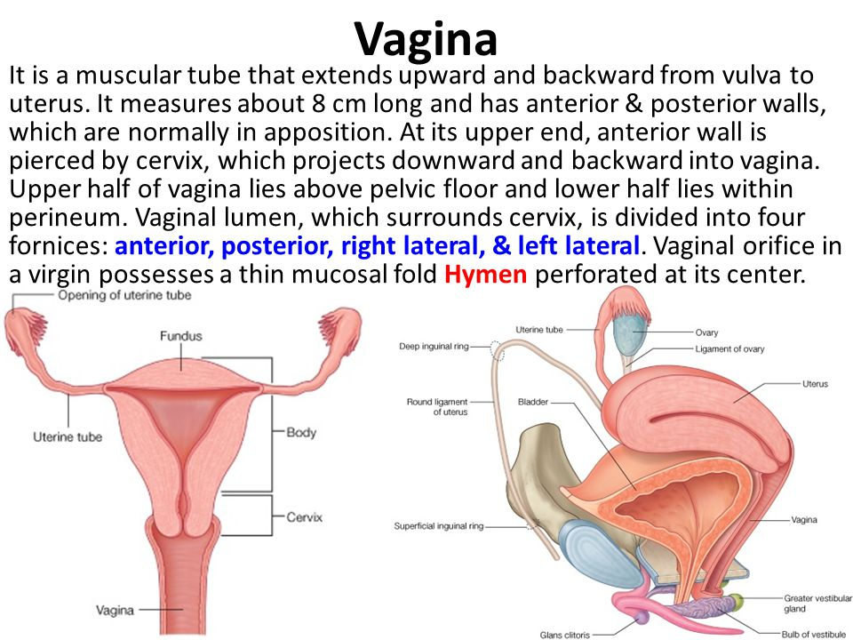 Pdf postpartum intrauterine device