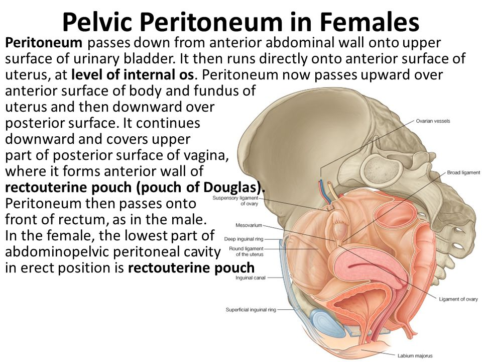 Pelvic Peritoneum in Females