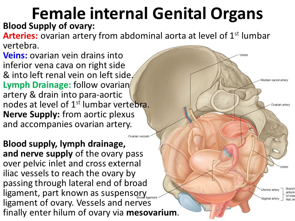 Female Internal Genital Organs Ppt Video Online Download