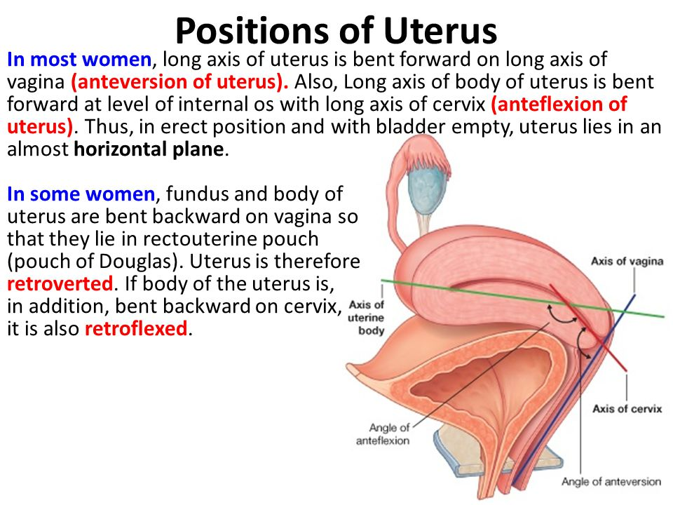 Positions of Uterus
