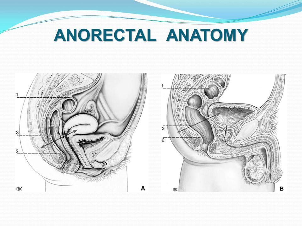 ANORECTAL ANATOMY