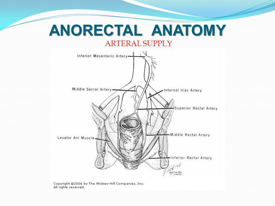 ANORECTAL ANATOMY ARTERAL SUPPLY