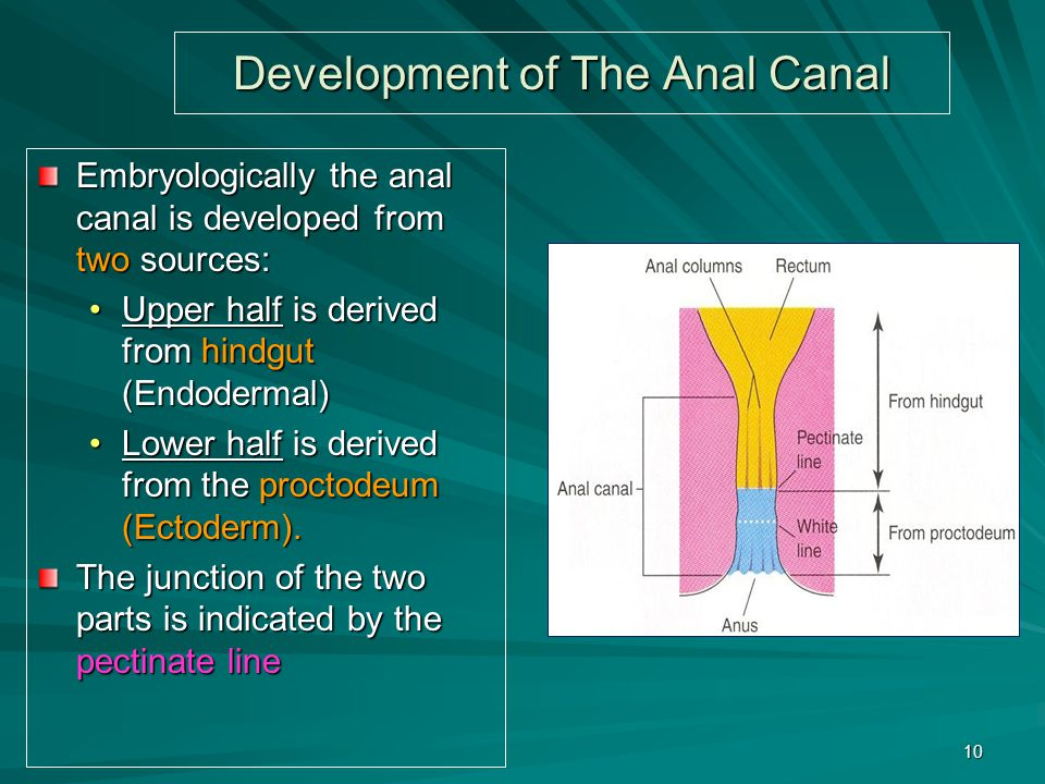 Development of The Anal Canal