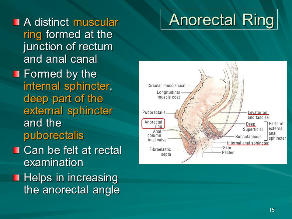 Anorectal Ring A distinct muscular ring formed at the junction of rectum and anal canal.