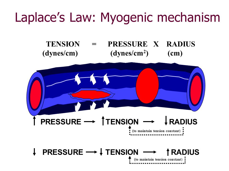 Laplace's Law: Myogenic mechanism