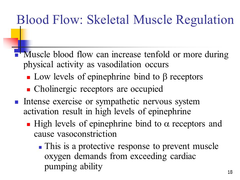Blood Flow: Skeletal Muscle Regulation