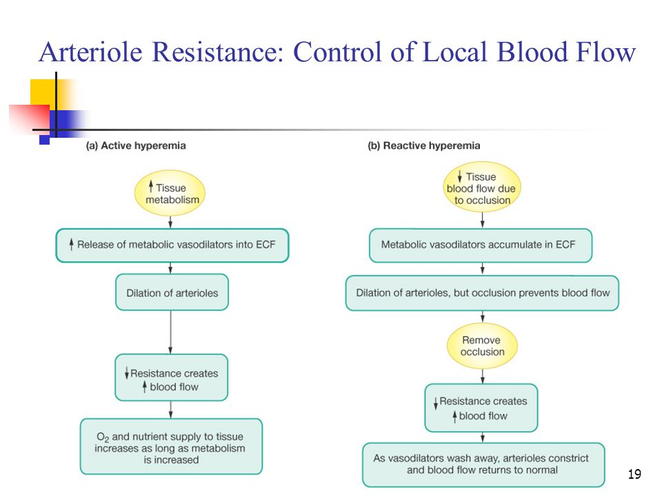 Arteriole Resistance: Control of Local Blood Flow