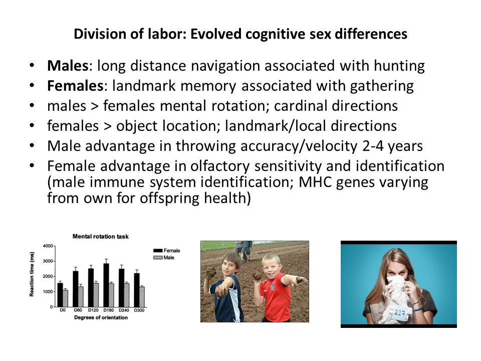Division of labor: Evolved cognitive sex differences