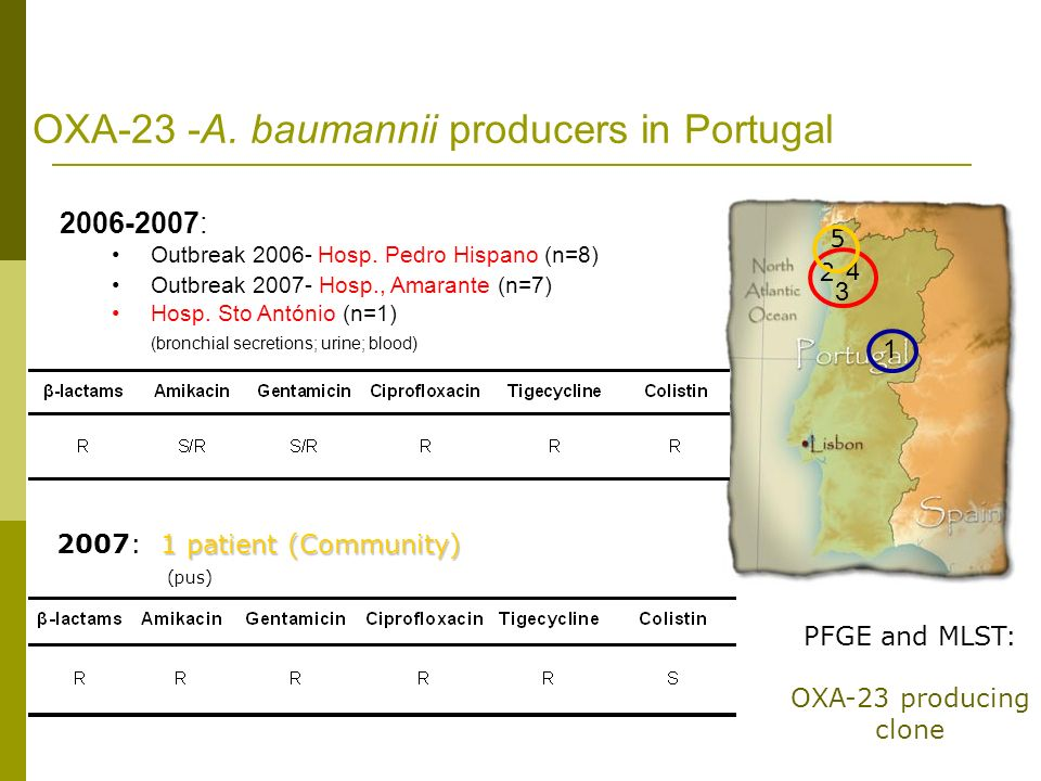 OXA-23 -A. baumannii producers in Portugal