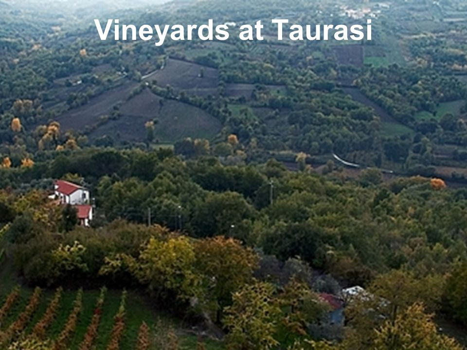 Vineyards at Taurasi