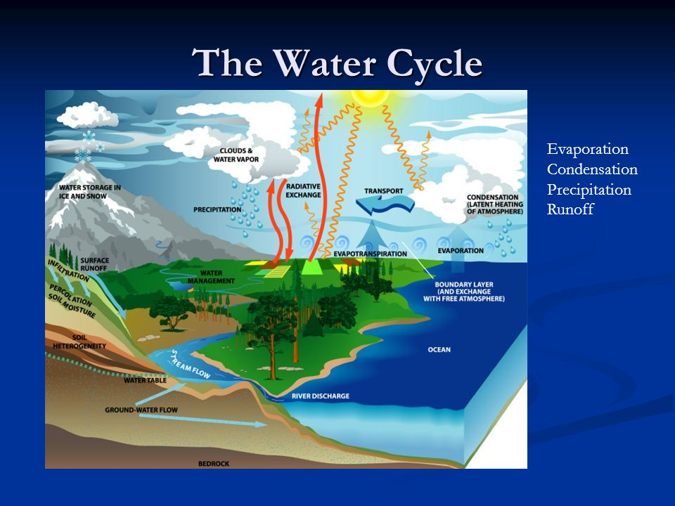 The Water Cycle Evaporation Condensation Precipitation Runoff