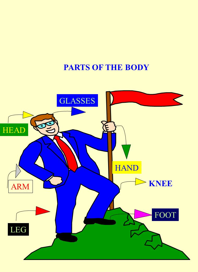 PARTS OF THE BODY GLASSES HEAD HAND KNEE ARM FOOT LEG
