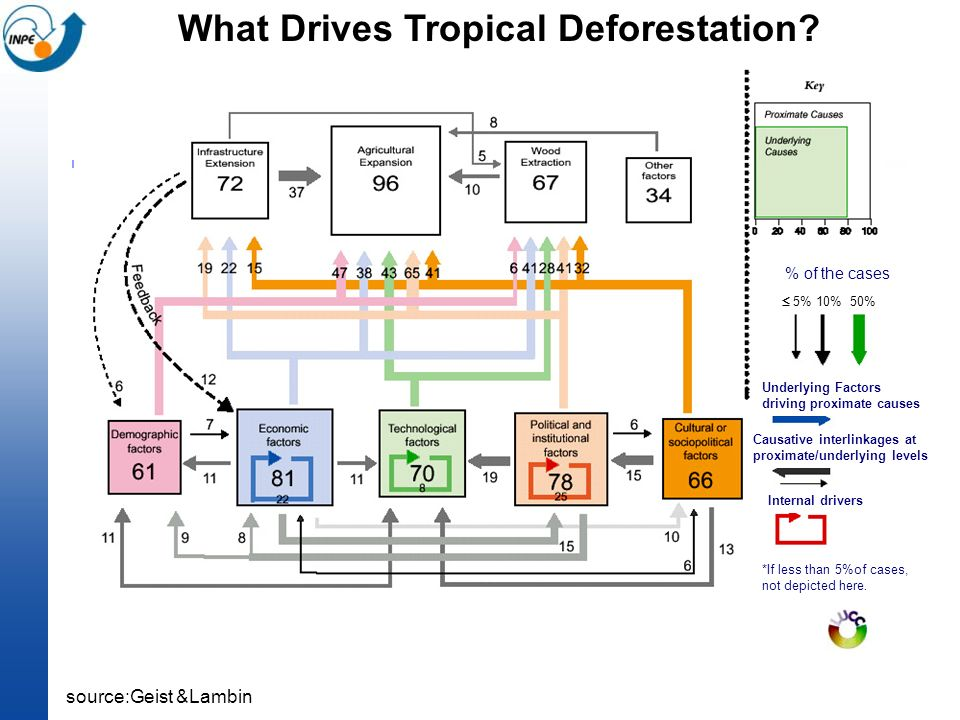 What Drives Tropical Deforestation