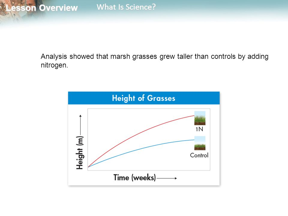 Analysis showed that marsh grasses grew taller than controls by adding nitrogen.