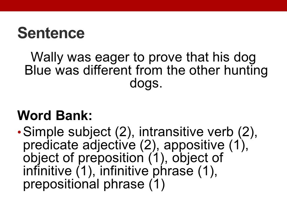 Sentence Wally was eager to prove that his dog Blue was different from the other hunting dogs. Word Bank: