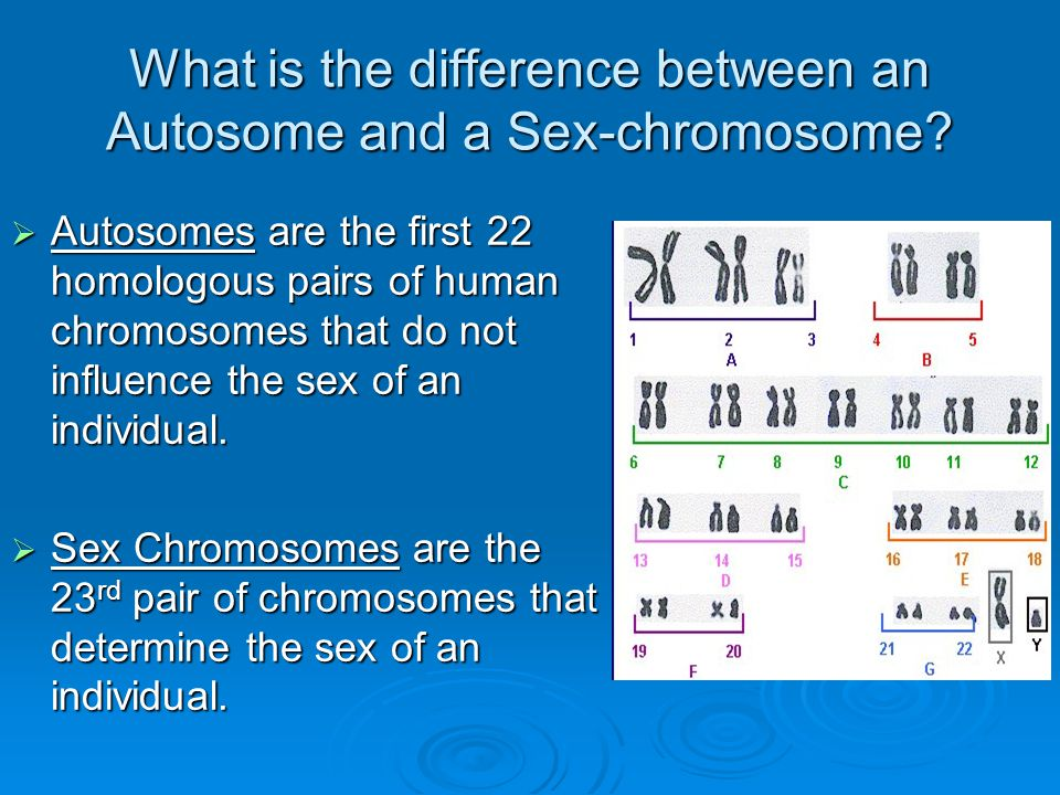 How do autosomes differ from sex chromosomes pic 4