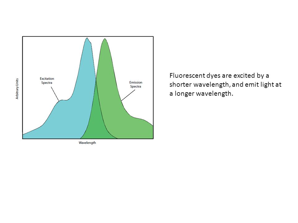 Fluorescent dyes are excited by a shorter wavelength, and emit light at a longer wavelength.