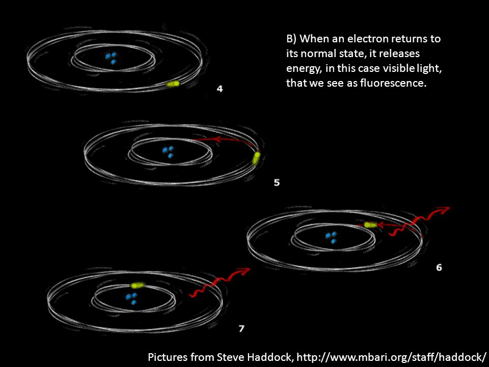 B) When an electron returns to its normal state, it releases energy, in this case visible light, that we see as fluorescence.